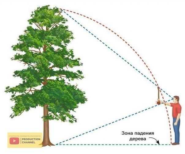 Как правильно завалить дерево в нужном направлении
